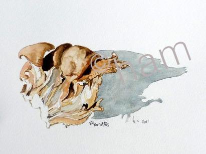 Pleurottes