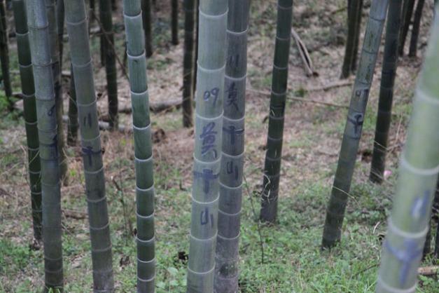 bamboos tagués