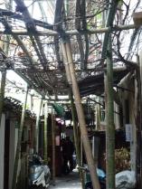 bambous ech