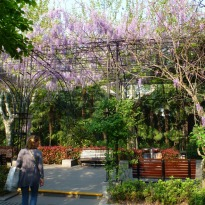 Fuxing Park 3