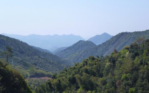 Montagnes de bamboos