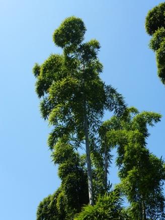 plumets de bamboos