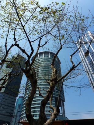 Shanghai aussi cela 3