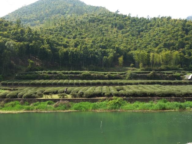 Thé et bamboos