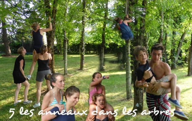 les anneaux dans les arbres
