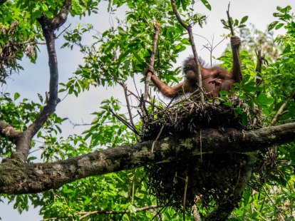 mon nid de ce jour!