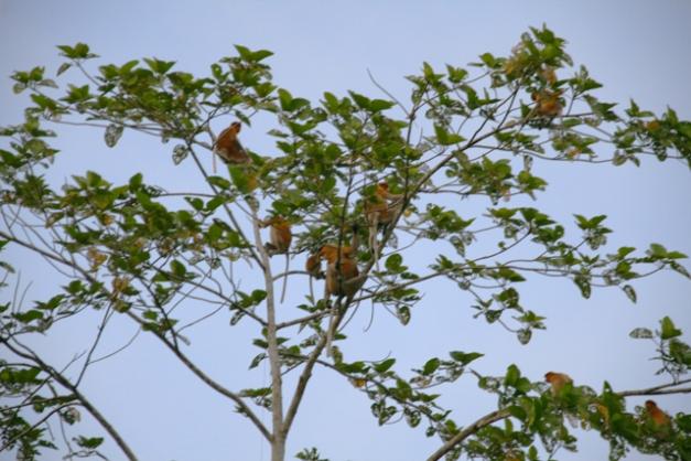 arbre a singes 2