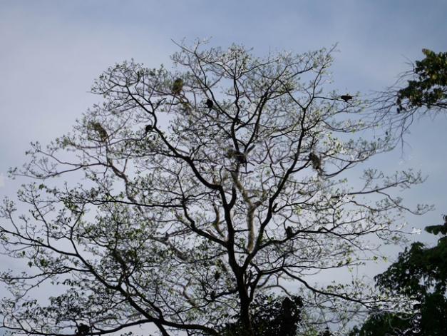 arbre a singes 3