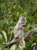 goûter de macaque 2