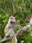goûter de macaque