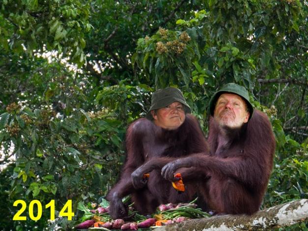 HAM's voeux 2014
