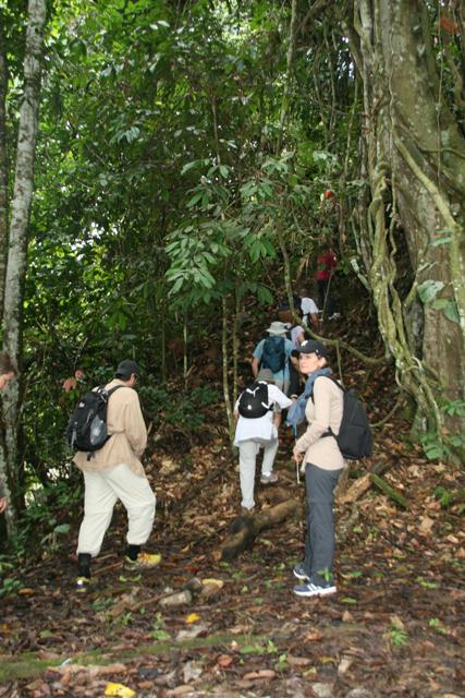 jungle start