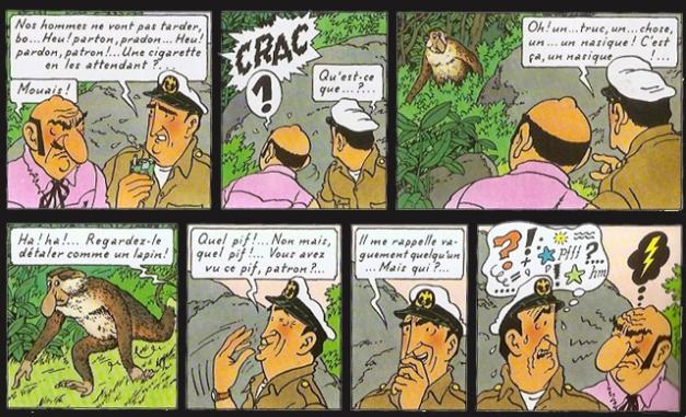 nasique Hergé